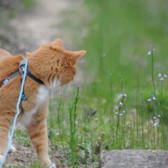 フォロー大歓迎/猫との暮らし/にゃんこ同好会/ねこにすと/ねこのきもち/花/... 桜が終わって草花が伸びてきたニャー😸🌱 …(3枚目)