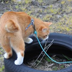 フォロー大歓迎/にゃんこ同好会/猫との暮らし/ねこのきもち/雨/散歩/... 雨が降ってきたニャー! 😿走って帰るニャ…(6枚目)
