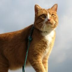 フォロー大歓迎/にゃんこ同好会/猫との暮らし/ねこのきもち/散歩/おでかけ スッキリしないけど一応晴れ⛅だニャー😸🐾…