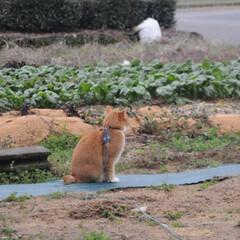 フォロー大歓迎/にゃんこ同好会/猫との暮らし/ねこのきもち/雪/散歩/... 雪が降ってきたニャー🙀 急いで帰るニャー…(6枚目)
