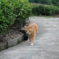 フォロー大歓迎/にゃんこ同好会/ねこのきもち/ねこ/散歩 もう一度散歩に行こうニャー😽🐾🐾🐾(5枚目)