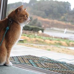 にゃんこ同好会/猫のいる暮らし/雨/散歩/おでかけ/フォロー大歓迎 雨だニャー😿 止むの待ってたけど止まない…(3枚目)