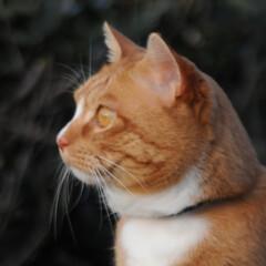 箱/にゃんこ同好会/猫との暮らし/ねこのきもち/散歩 落ち着く場所発見だニャー😻(10枚目)