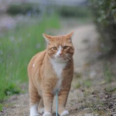 フォロー大歓迎/猫との暮らし/にゃんこ同好会/ねこにすと/ねこのきもち/花/... 桜が終わって草花が伸びてきたニャー😸🌱 …(8枚目)