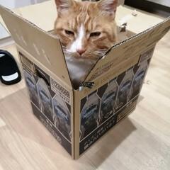 箱/にゃんこ同好会/猫との暮らし/ねこのきもち/散歩 落ち着く場所発見だニャー😻