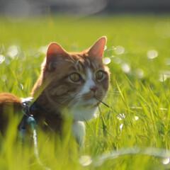フォロー大歓迎/にゃんこ同好会/猫との暮らし/ねこのきもち/散歩 今日も爽やかな天気☀️😸 爽快だニャー😻…(6枚目)