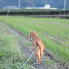 にゃんこ同好会/日暮れ/ねこのきもち/散歩/おでかけ/フォロー大歓迎 早く散歩に行かないと日がくれるニャー🙀(4枚目)
