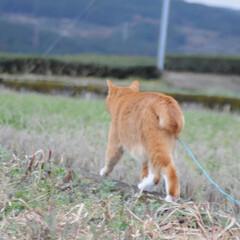 フォロー大歓迎/にゃんこ同好会/猫との暮らし/ねこのきもち/雪/散歩/... 雪が降ってきたニャー🙀 急いで帰るニャー…(2枚目)