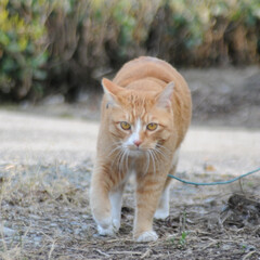 フォロー大歓迎/にゃんこ同好会/猫との暮らし/ねこにすと/ねこのきもち/春/... 🌻季節は進んでいるニャー😸(5枚目)