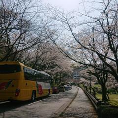 春の花/はる/サクラ/春の一枚/熊本城 同じ場所で見た桜🌸昼と夜では違う雰囲気🎶😊