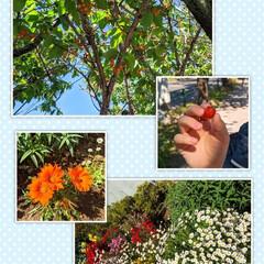 青空/お花/さくらんぼ/お散歩 今日のお散歩で見つけたもの。  先日見つ…