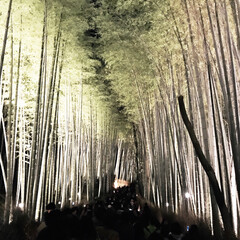 竹林の道/嵐山