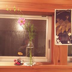 装飾/ハロウィン/花 ウンリュウヤナギとコスモスと樹脂粘土細工…