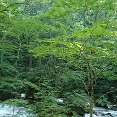 奥入瀬渓流/十和田湖/青森県/おでかけ