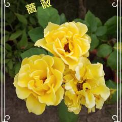 おうち/花 (1枚目)