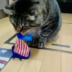 かぶりもの/猫/にゃんこ同好会 とにかく気にくわないらしい😅💦 せっかく…(2枚目)
