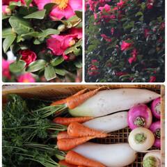 野菜/お正月2020/おでかけ 🥕超✨産地直送野菜  🥕お野菜の写真は、…