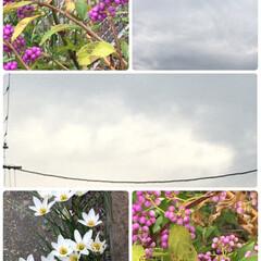 花/空/夕日 【🌸紫式部さんを、やっと見つけた🌸】  …