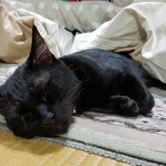 おやすみショット コタツの中から出てきて、そのまま爆睡(笑)