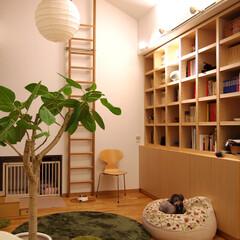 ペット部屋/ペットリフォーム/リフォーム/リノベーション/造作家具 WAN部屋です。リビングダイニングを含め…