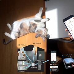 ねこ/猫/天窓/スマートフォン/スマートフォンアプリ/ブラインド/... 天窓やブラインドの自動開閉システム《VE…