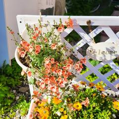 多肉植物/マイガーデン/手作り花壇/手作りの庭/季節を楽しむ/100均/... 玄関前ガーデニングのイベント参加します❤…(1枚目)