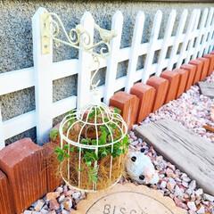 多肉植物/マイガーデン/手作り花壇/手作りの庭/季節を楽しむ/100均/... 玄関前ガーデニングのイベント参加します❤…(2枚目)