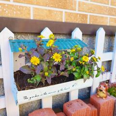 多肉植物/マイガーデン/手作り花壇/手作りの庭/季節を楽しむ/100均/... 玄関前ガーデニングのイベント参加します❤…(4枚目)
