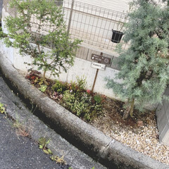 花壇/緑/寄せ植え 可愛いなーと思って気ままに買った植物達。…
