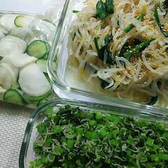 ごま油/緑の野菜/作り置きおかず 色、2色!!笑🤣  もやしとほうれん草の…
