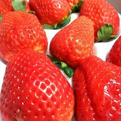 イチゴ/いちご/スカイベリー/栃木のいちご 那須に住んでる 大学時代の友達夫婦から …(1枚目)
