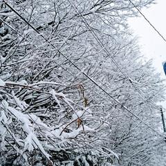 「起きたら雪が積もっていました🙌今期初めて…」(3枚目)