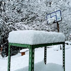 「起きたら雪が積もっていました🙌今期初めて…」(2枚目)