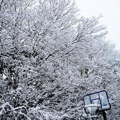 「起きたら雪が積もっていました🙌今期初めて…」(1枚目)