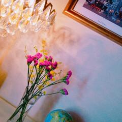 生け花/フォロー大歓迎/インテリア/住まい 久しぶりに花を買い、飾ってみました。雰囲…