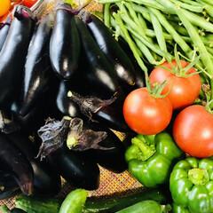 夏野菜/何して食べよ/大収穫/家庭菜園/ハウスの🍅🍅🍅 ハウスのトマト達🍅🍅🍅 今年は中玉トマト…(2枚目)