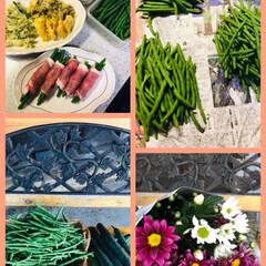 家庭菜園/野菜収穫/フォロー大歓迎 夕方大量のインゲンを収穫しました😊 大き…