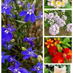 庭づくり 今朝気になった庭の花🌺🌼  夏の日差しに…