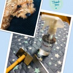 AquaX ペットのお手入れスプレー  | AquaX(アクアエックス)(その他ペット用品、生き物)を使ったクチコミ「ペット用お手入れスプレー届きました😊 洗…」