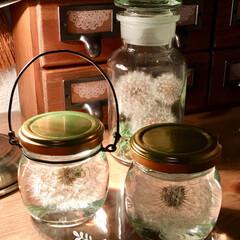 天然素材/たんぽぽの綿毛/ハンドメイド たんぽぽの綿毛 ハーバリウム作りました☺…