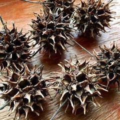 天然素材/モミジバフウの木/モミジバフウの実/モミジバフウ/令和の一枚/LIMIA手作りし隊/... 紅葉葉風  モミジバフウの実が沢山拾えま…