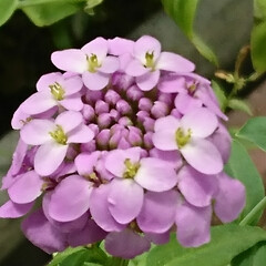 遊歩道の花/ピンクのお花 💞💞💞💞💞?.:*:・    小さな花が…(3枚目)