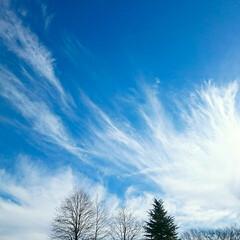 散歩/空/風景 きれいな空!