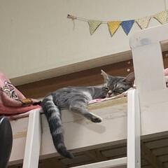 おやすみショット ミル♡ 二段ベットの上、大好き‼︎ 落ち…
