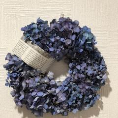 親子で楽しむ/紫陽花ドライ/紫陽花リース 二週間前に母と2人で作った紫陽花のリース…