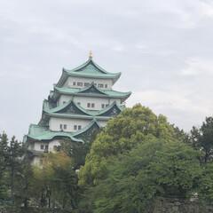 くんしらん/庭の花たち/名古屋城/チューリップ/デイサービス 今日は名古屋城の近くを通ったので、藤は咲…(2枚目)