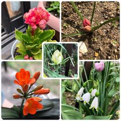 くんしらん/庭の花たち/名古屋城/チューリップ/デイサービス 今日は名古屋城の近くを通ったので、藤は咲…