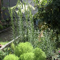 童心に帰る/ビニールプール/水鉄砲/百合/デイサービス/職場の庭 この暑さで先に咲いた百合がやられちゃうね…