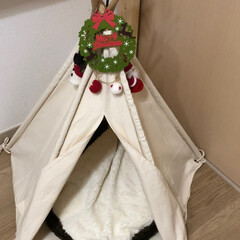 クリスマス/わんこ同好会/ペット同好会/セリア/フォロー大歓迎 空ちゃん🐶のティピーテントを セリアの🎄…