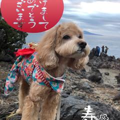 城ヶ崎海岸/わんこ同好会/お正月2020/フォロー大歓迎 🎍あけまして  おめでとう ございます🎍…
